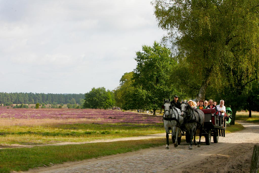 Carriage rides through the Lüneburg Heath