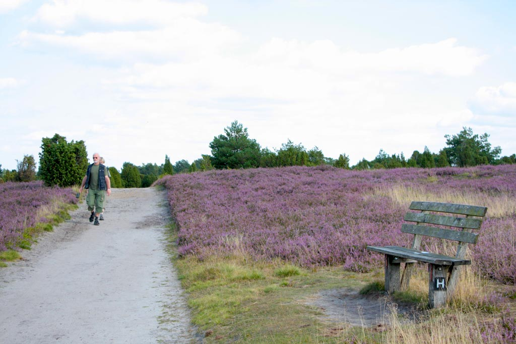 Hiking through the Lüneburg Heath